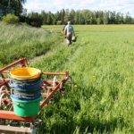 """Viljelymaan kalleus hankaloittaa viljelijöiden elämää – uusia tapoja yritetään kehittää: """"Ilman alkutuotantoa hiljaista olisi"""""""