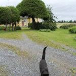 Lapu-kissa otata vieraan vastaan talon pihassa. Kuva: Erkki Koivisto