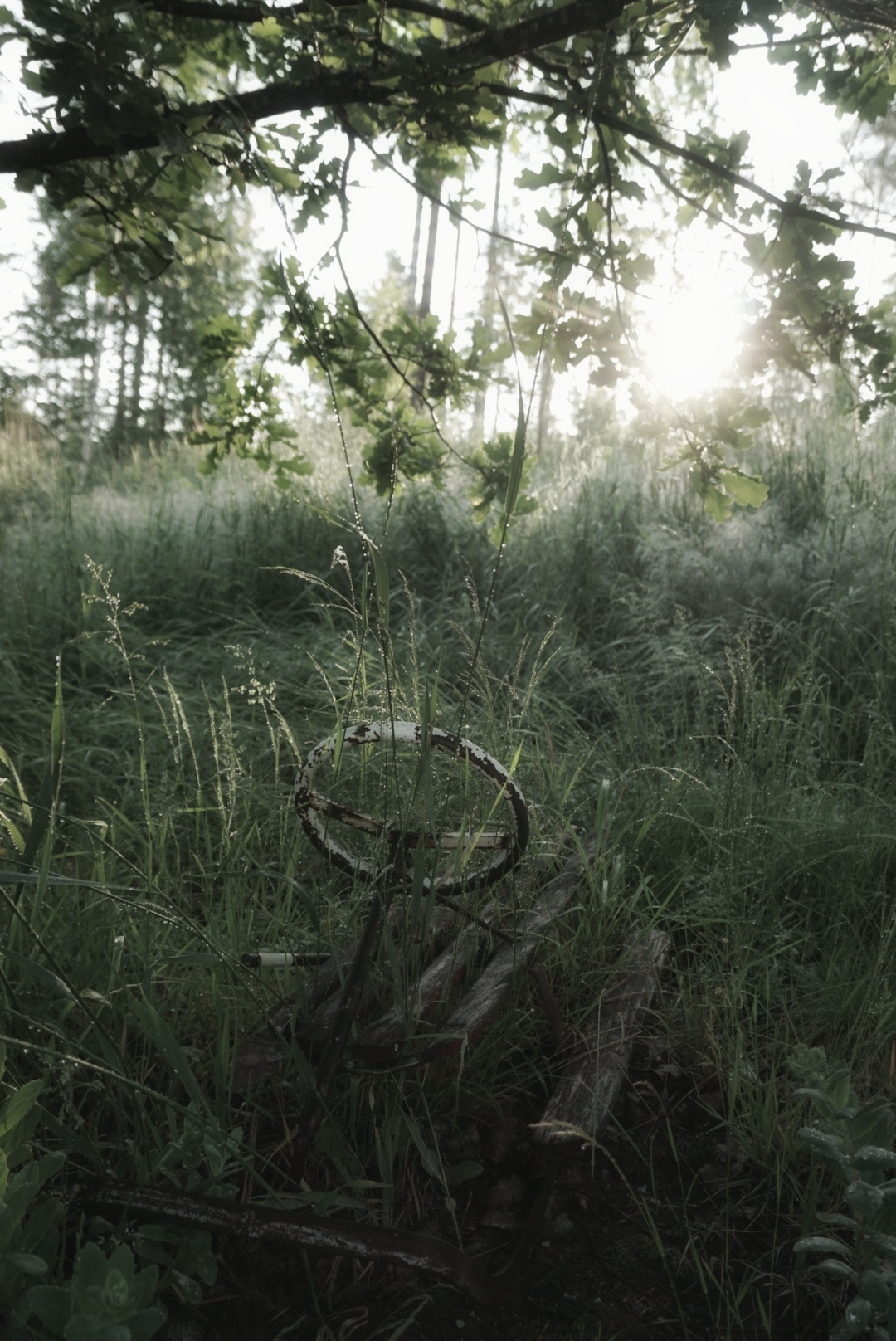 Aamukasteessa. Kuva:  Saija Reinvall-Lähde