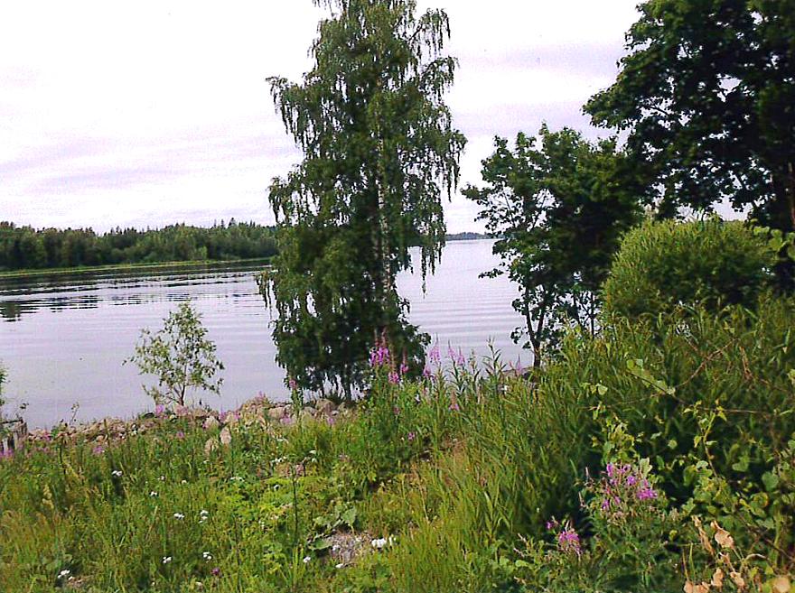 Järvimaisema. Kuva: Raakkel Naskali