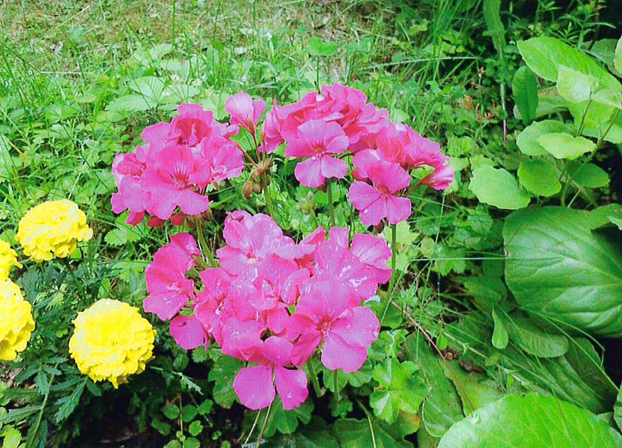 Violetti hurmuri. Järvimaisema. Kuva: Raakkel Naskali