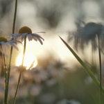 Kesäkuvakisa: Luonto herää ja nukkuu