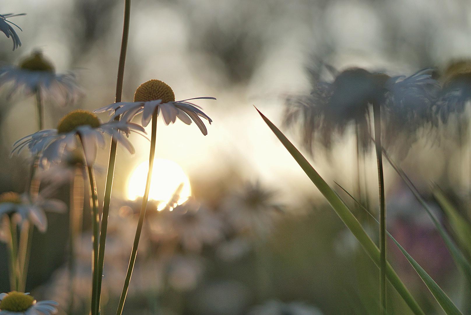 Ilta-auringossa. Kuva: Saija Reinvall-Lähde