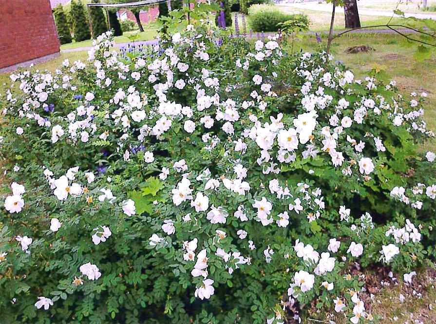 Kukkapaljoutta. Järvimaisema. Kuva: Raakkel Naskali