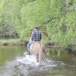 Kesäkuvakisa: Peltotöistä järveen ja sinitintin äkkilähtö
