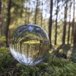 Kesäkuva: Metsä pallossa