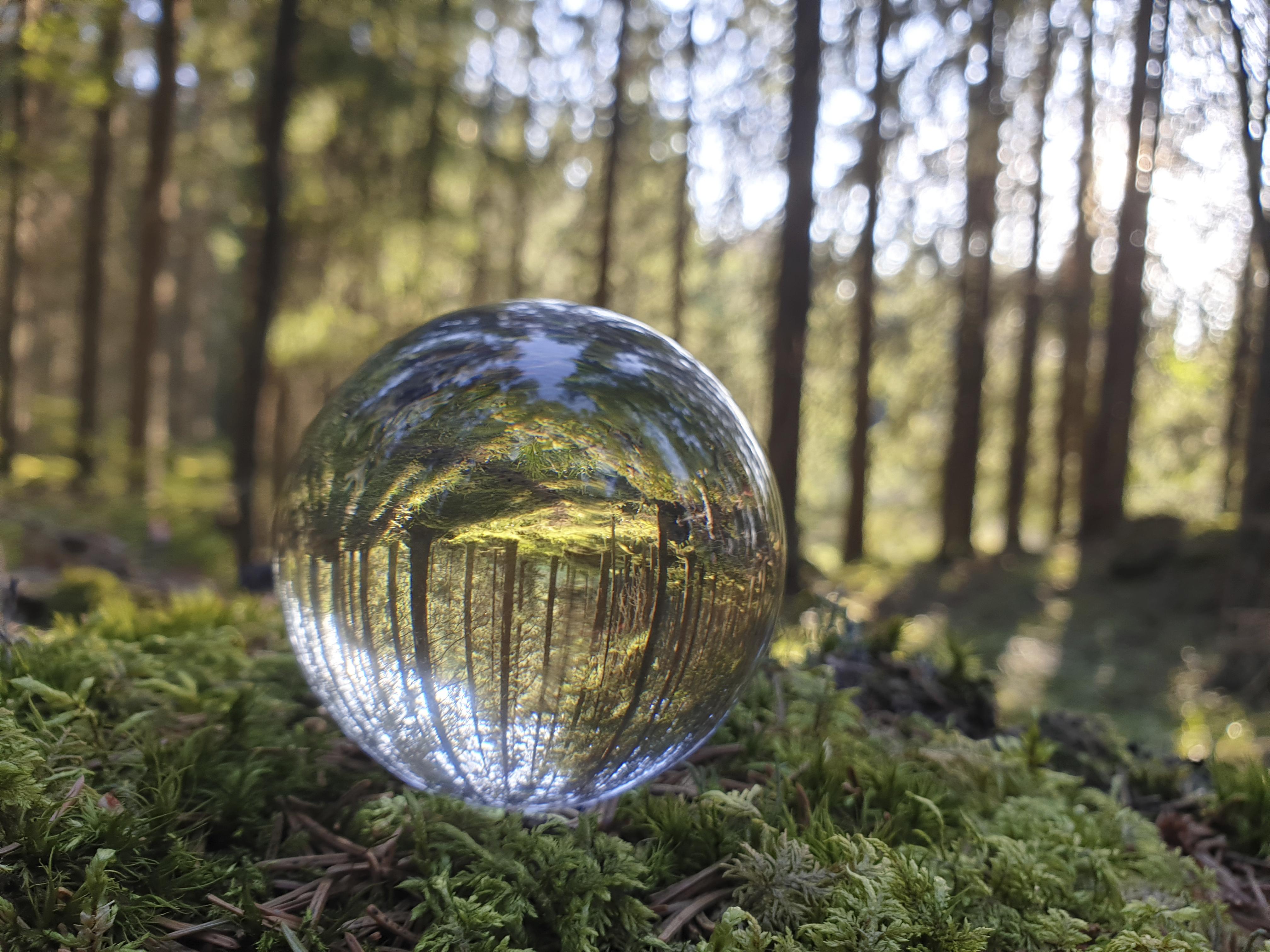 Metsä pallossa. Kuva: Mirva Kujala