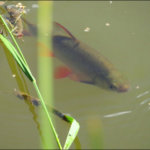 Kesäkuvakisa: Tuijottaja järvessä