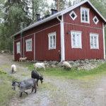 Pakoon kaupunkielämää ja kallista asumista – Eurooppalainen trendi näkyy jo myös Suomessa