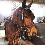 Hyviä näyttöjä paikallisilta ravureilta – loppuvuodesta nähtiin myös hevosihmisten kauhuskenaario Teivon V75-raveissa