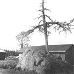 Perjantaipaketti viikko 4: Kartanokaupalle tuli loppu, mutta Vesilahden noitapuut porskuttavat