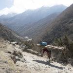 """Voimaa Himalajalta – """"Kevättä ilmassa"""": Avoin kuvakisa kaikille lehden lukijoille"""