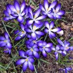 Kevään kukkaloisto vei voiton