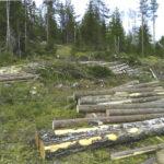 Lempäälässä metsää hakataan lintujen pesintäaikana