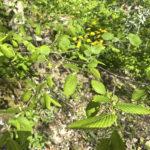 Lukion puulajipuisto sai 5 000 euron rahoituksen Ilmastonmuutosvoima-hankkeelta