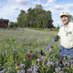 Maisemakukkapelto ylitti Mikko Kärjen odotukset – Kukkia käydään kuvaamassa lähikunnista asti, ja nyt ne ovat loistossaan