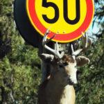 Peuravaarasta muistuttava liikennemerkki Onkemäellä