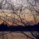 Lukijan kuva: Aamu antaa uutta toivoa