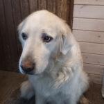 Eläimiä autetaan myös omistajia tukemalla – Minna sai apua lemmikeilleen