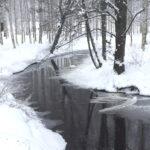 """Onkemäen purolla talvehtii """"Mokoma""""-niminen laulujoutsen, joka on jo kolmatta talvea Raisa Lindellin täysihoidossa"""