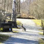 Lukijan kuva: Jäniksellä mielessä orvokkiherkut