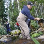 Ennätysmäärä talkoili uhanalaisen taimenen puolesta – Lempäälän Ruotasojan kutusoraikot auttavat arvokalaa lisääntymään rauhassa